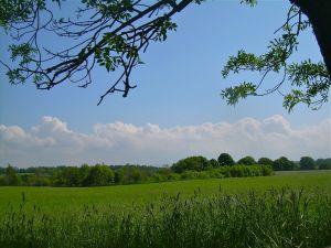 Midlothian wheat